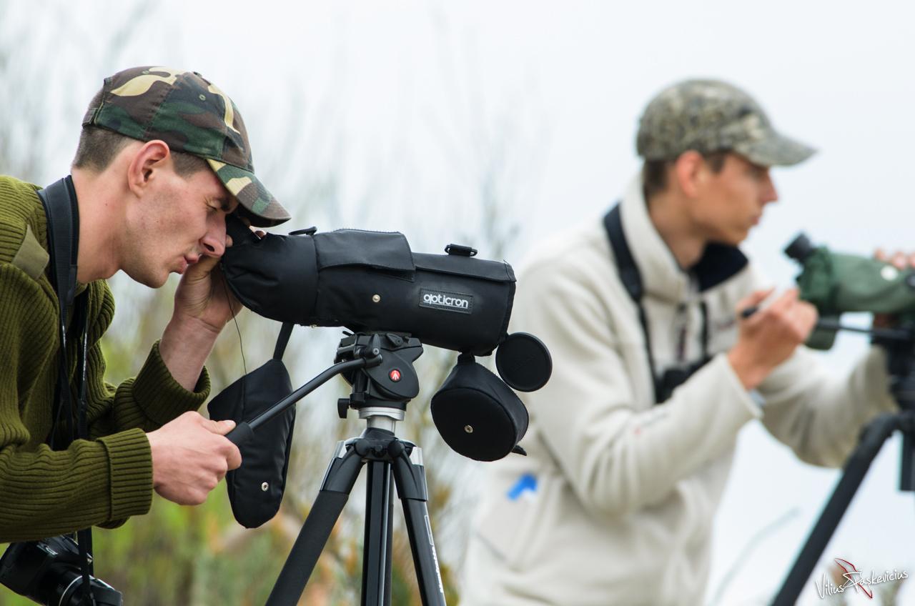 Putnu vērošana
